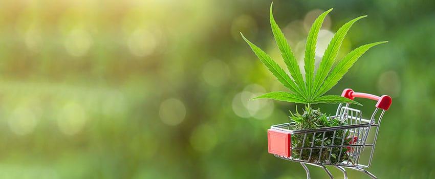 Cannabis Kaufen
