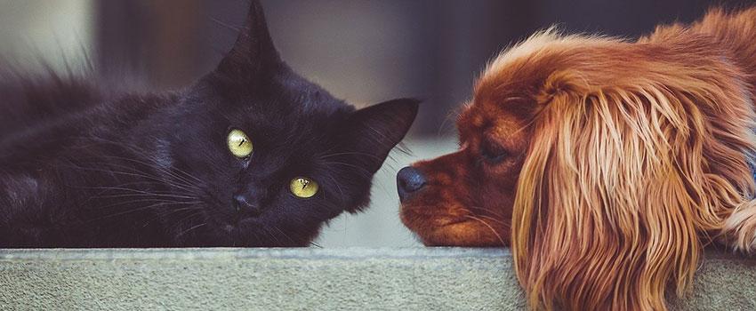 Dutch Natural Healing CBD Öl für Haustiere